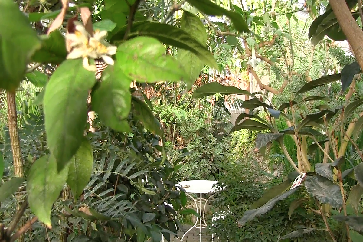 Rexburg home to tropical rainforest