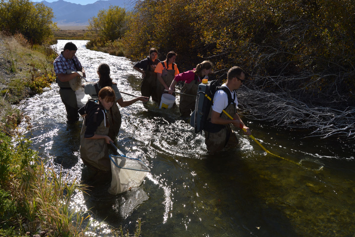 BYU-I biology professor offers fish research project to students