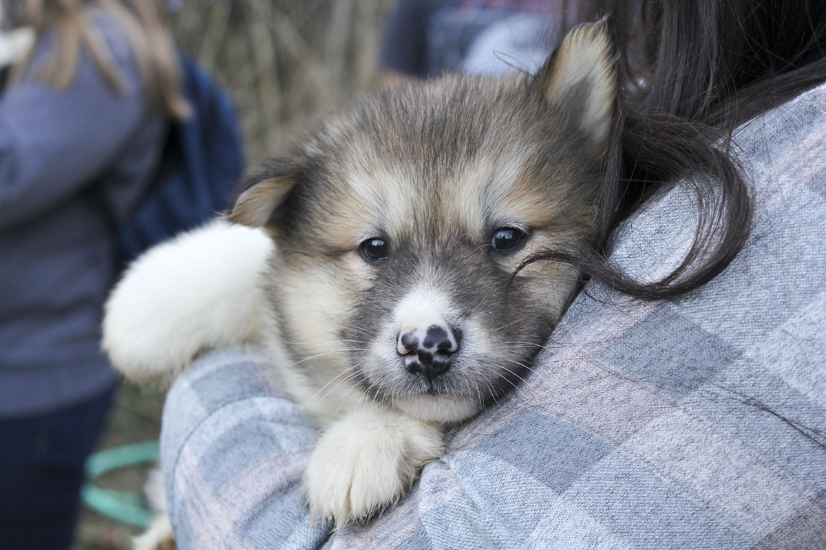 OLC offers rare dogsled experience