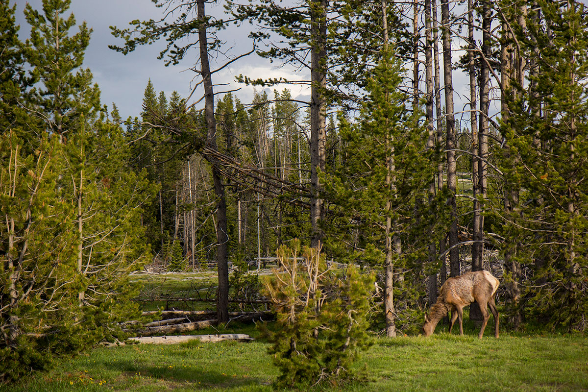 Tips for planning a trip to Yellowstone National Park