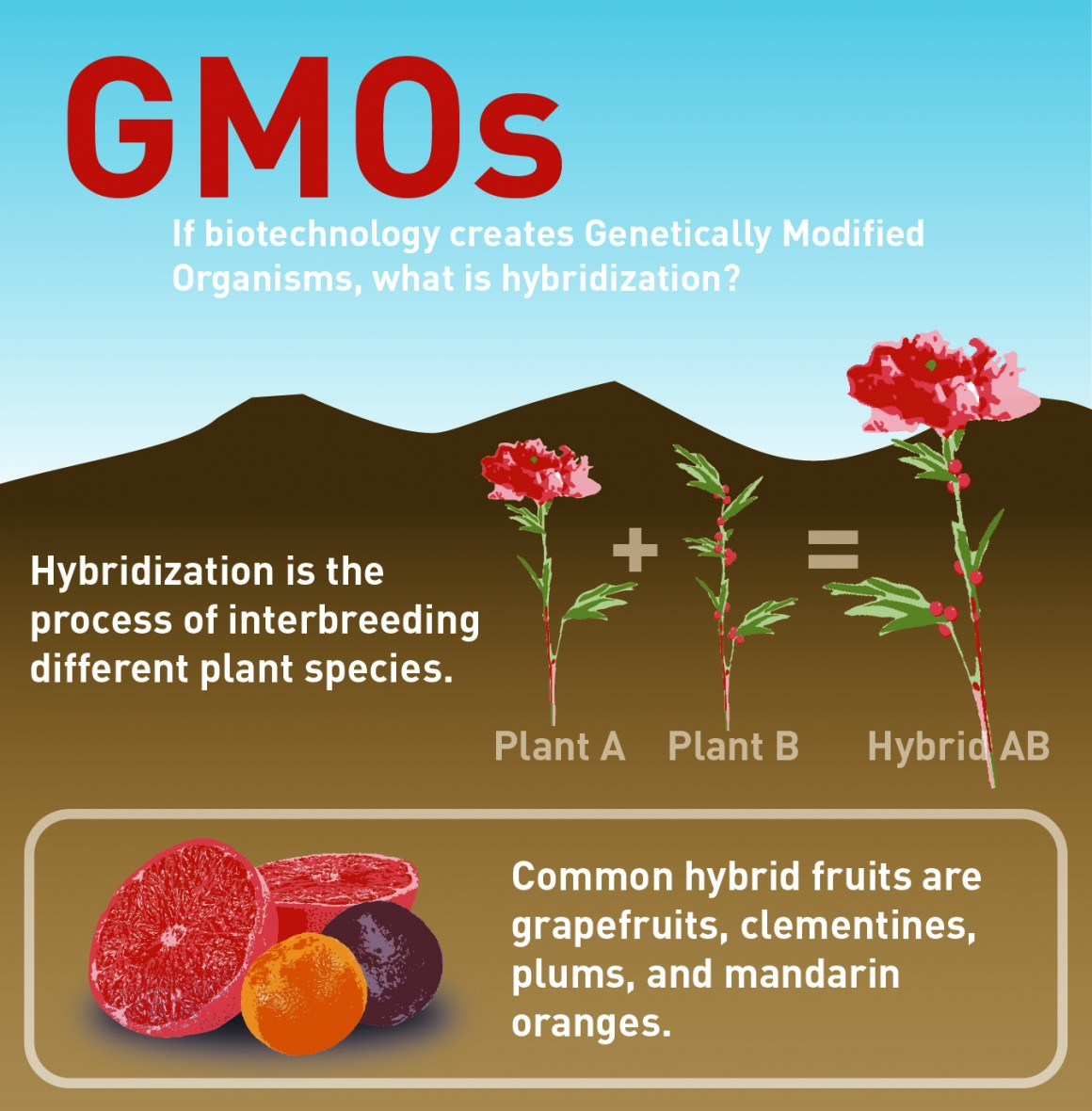 GMO (Cameron Clements, Ana Torres and Lauren Conte, Scroll Illustration)