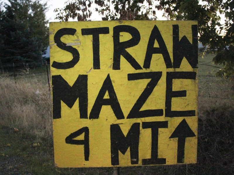 Straw maze (Emily Rose Perkins, Scroll Photo)