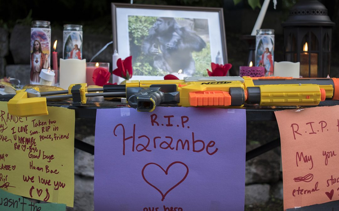 Candles out for Harambe