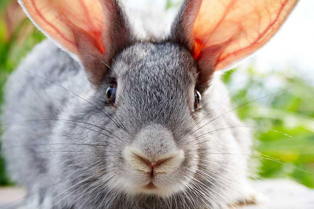Police warn college students after prank involving dead bunny
