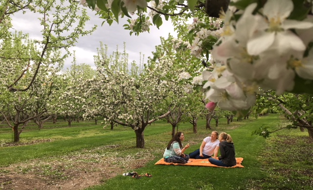 Apple blossom festival springs up at BYU-Idaho
