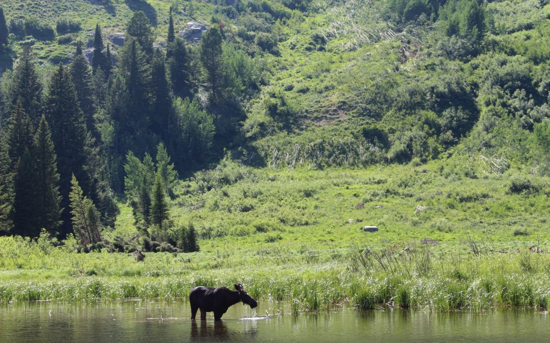 Four places you won't expect to see wildlife