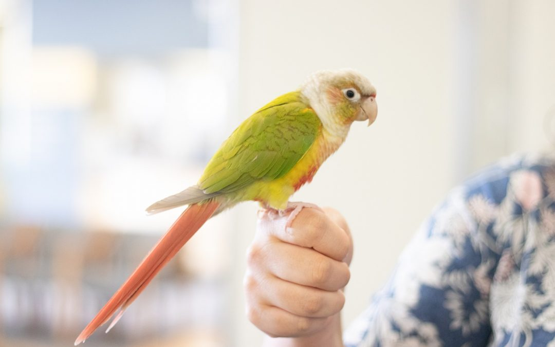 'Sushi is all I need': A student's life with an ESA bird