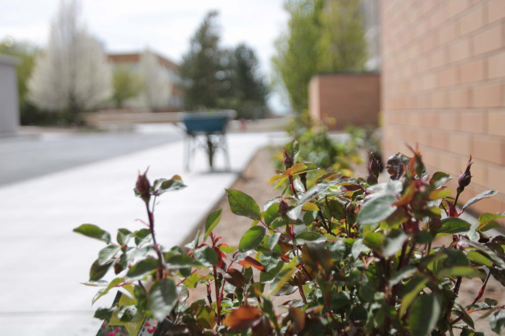 Bushes are laid out near the Studio, waiting to be planted.