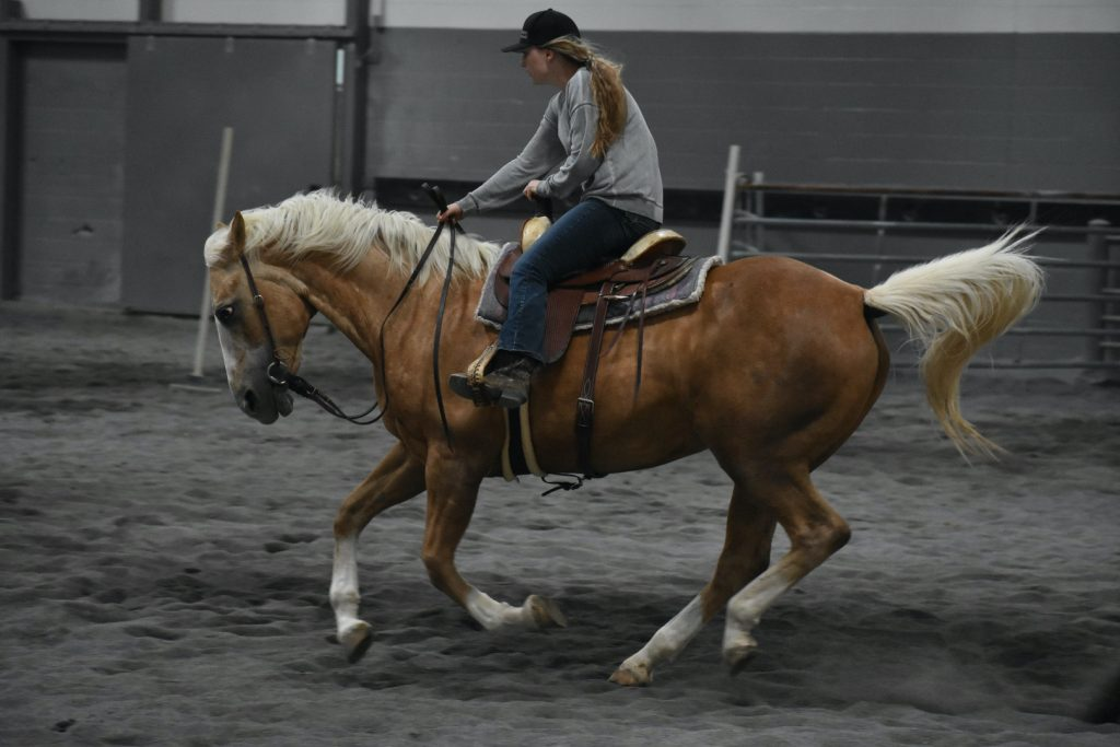 Millie the palomino cantering
