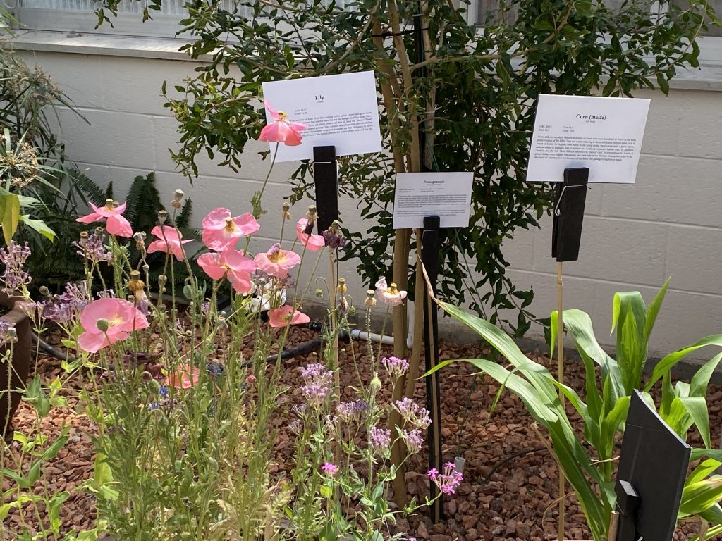 A close-up of some of the many plants on display in the garden.