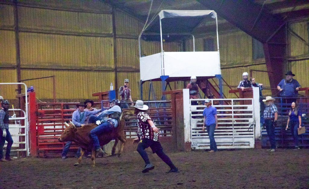 A steer rider struggles to hold on.