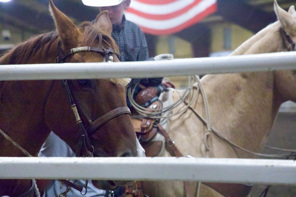 Team ropers ride through the arena.
