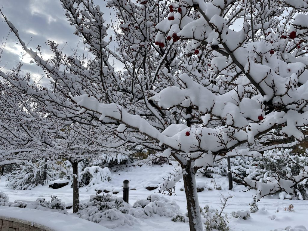 A close up on branches of a bare tree with red berries covered in snow. Other identical trees are visible in the background.